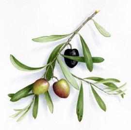 cherche olivier gard vaucluse